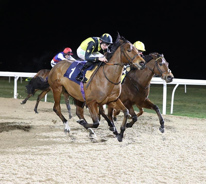 Horses racing under floodlights at Newcastle Racecourse