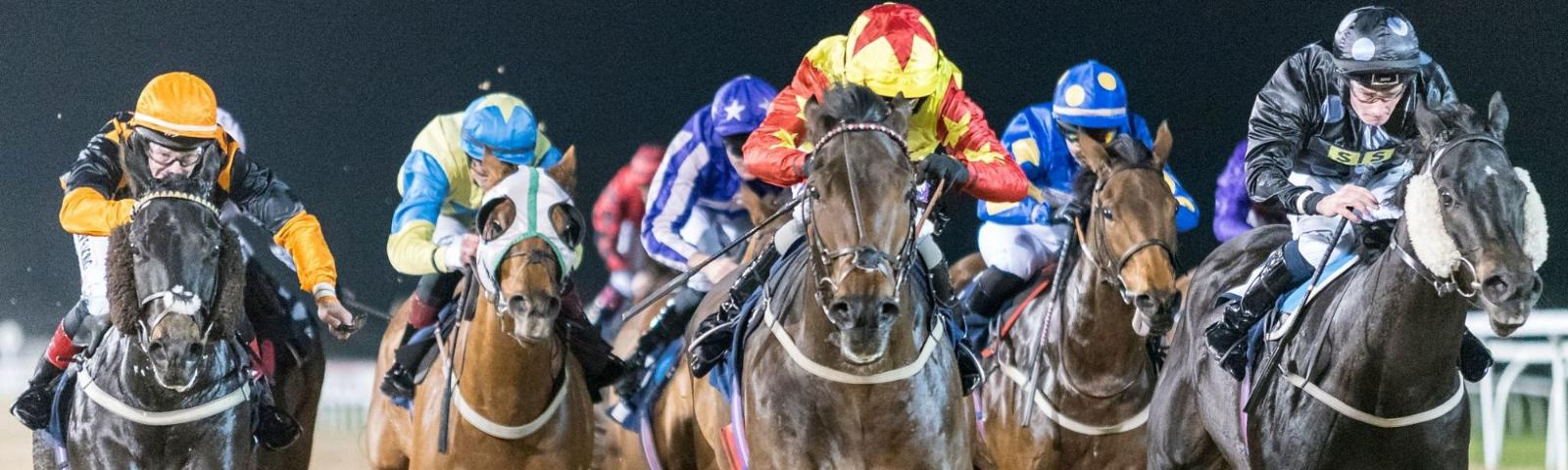 A group of racing horses very close to the camera. The background shows the night sky.