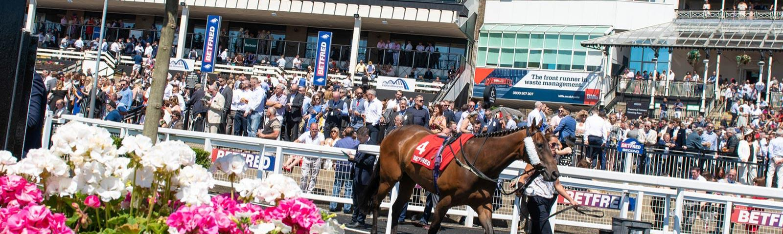 Horse being led through parade ring with the crowds in the background.