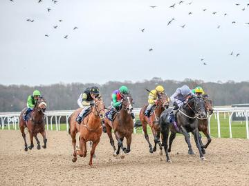 Horses with jockeys charging down a straight at Newcastle Racecourse
